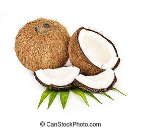coconut on white background