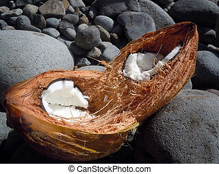 Open coconut on the stones of coast in Dominica