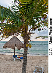 Coconut Palm and Beach Hut in Morning