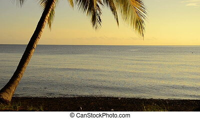 coconut palm in sunrise at the ocea