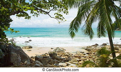 Coconut palm on exotic, tropical beach with boulders