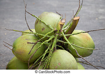 Coconut palm on the cement floor