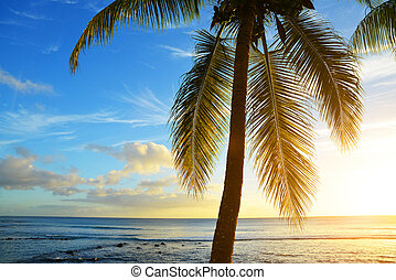 Coconut palm tree at tropical coast of Mauritius island at sunset.