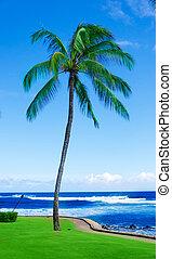 Coconut Palm tree by the ocean in Hawaii, Kauai