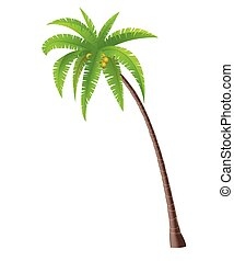 Coconut Palm tree - Coconut palm tree on white background