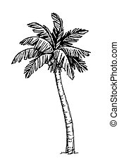 Coconut palm tree - Hand drawn vector illustration of...