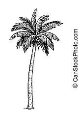 Coconut palm tree - Hand drawn vector illustration of...