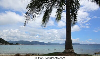 Coconut palm tree on Beautiful Tropical beach