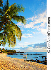 Coconut palm tree on sandy beach. Tropical coast of Mauritius island at sunset.