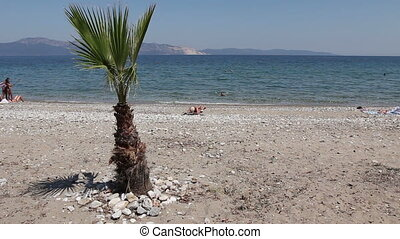 Coconut palm tree on sandy beach - Young palm tree is in...