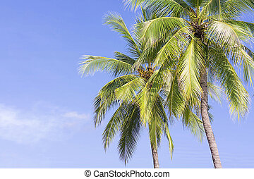 Coconut palm tree on sky background, Low Angle View.