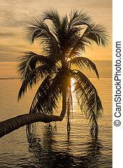 Coconut palm tree silhouette at sunset. Koh Phangan island, ...