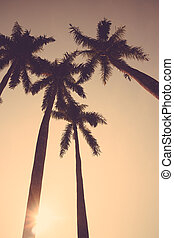 coconut palm tree sunset silhouette vintage retro