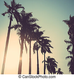 coconut palm tree sunset vintage retro