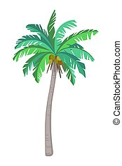 Coconut palm tree - Vector illustration of coconut palm...