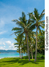 Coconut palm tree with Beautiful Tropical beach