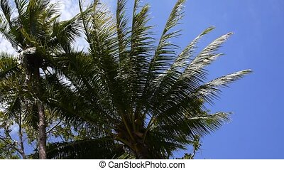 Coconut Palm Trees against Blue Sky. Slow Motion.