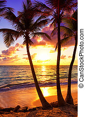 Coconut palm trees against colorful sunset in Saona island. Caribbean sea, Dominican Republic
