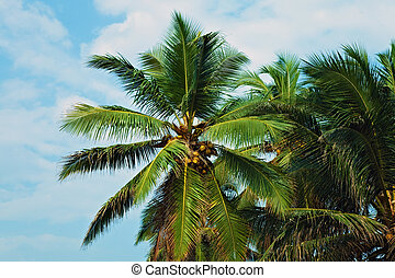 Coconut palm trees against the sky