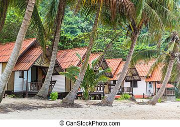 Coconut palm trees along the beach