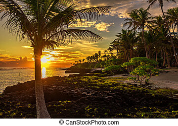 Coconut palm trees and black rocks on the beach during the sunset on Upolu, Samoa