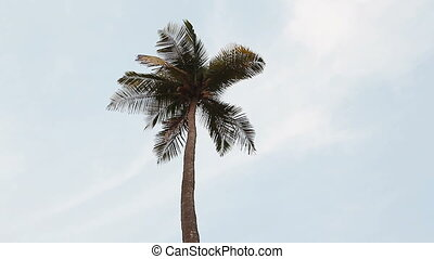 coconut palm trees and sky