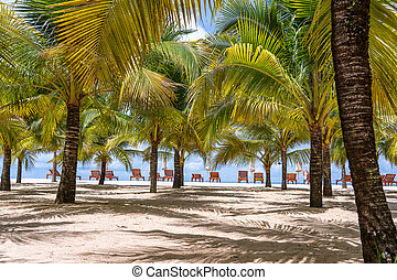 Coconut palm trees and sun loungers on white sandy beach ...