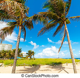 Coconut palm trees and white sand in Pompano Beach