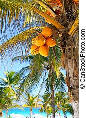 coconut palm trees Caribbean tropical beach