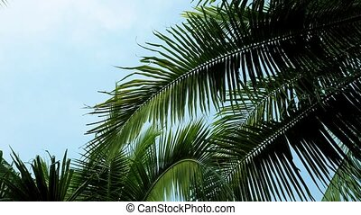 Coconut palm trees foliage closeup. Aerial flight 4k video....