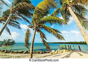 Coconut palm trees in famous Sombrero Beach