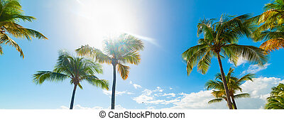 Coconut palm trees in Guadeloupe