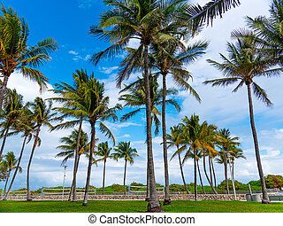 Coconut palm trees in Lummus Park