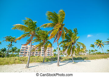 Coconut Palm trees in Smathers Beach
