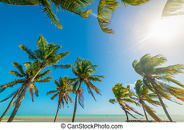 Coconut palm trees in Smathers Beach in Key West
