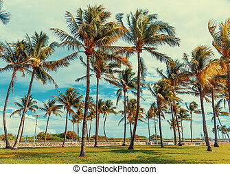 Coconut palm trees in Suth Beach at sunset