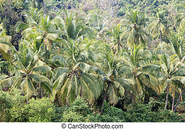 coconut palm trees in tropical jungle