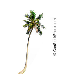 Coconut palm trees isolated on white background. Included clipping path.