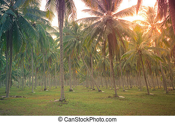 Coconut palm trees on beach at sunset. Vintage tone.