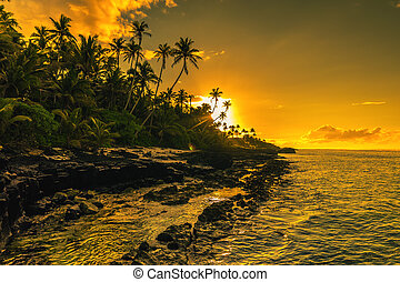 Coconut palm trees on beach during the sunrise on Upolu, Samoa Islands