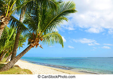 Coconut palm trees on tropical sandy beach of Mauritius island.