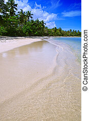 Coconut Palm trees on white sandy beach in Caribbean sea.