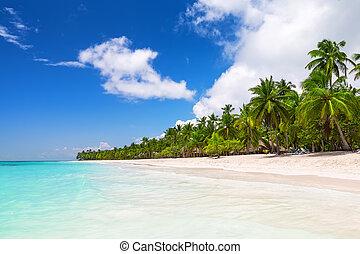 Coconut Palm trees on white sandy beach in Saona island,...