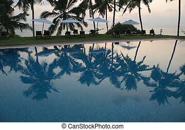 coconut palm trees reflecting in the water pool near the ocean