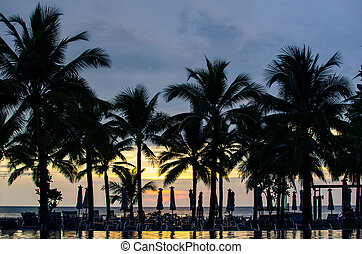 coconut palm trees silhouette