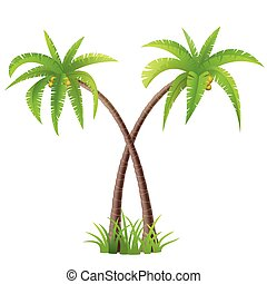 Coconut palm trees - Two coconut palm trees on white