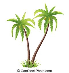 Coconut palm trees - Vector illustration of two palm trees
