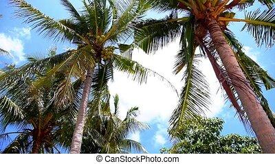 Coconut Palms against a Blue Sky on the Tropical Sunny Beach. Speed up.