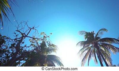 Coconut palms beach