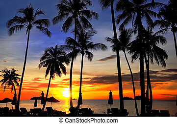 Coconut palms on sand beach in tropic on sunset. Siam...